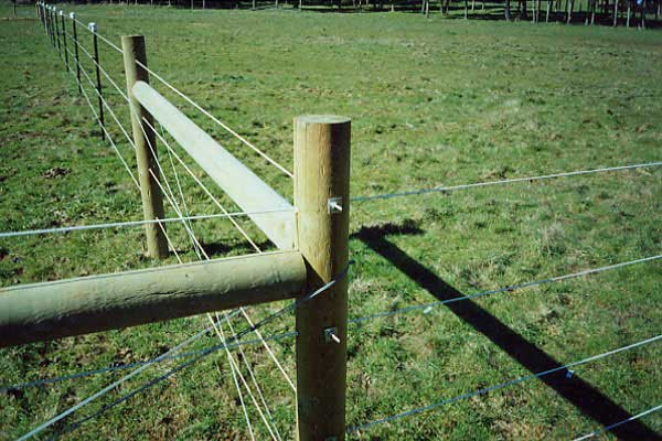 Wire Horse Fence